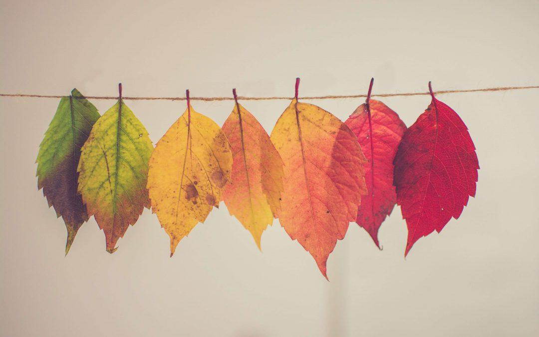 رنگ سازمانی چه تاثیری در هویت برند دارد؟