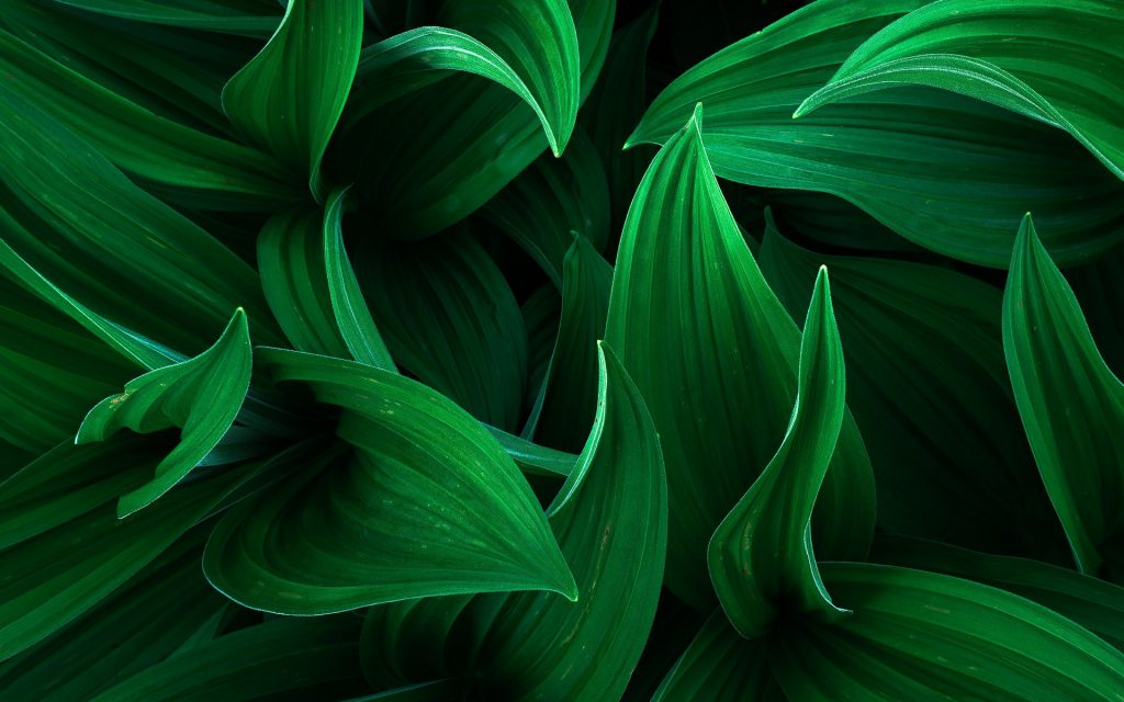 green color leaves