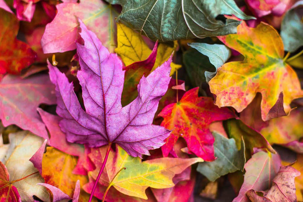 a few leaves with several color